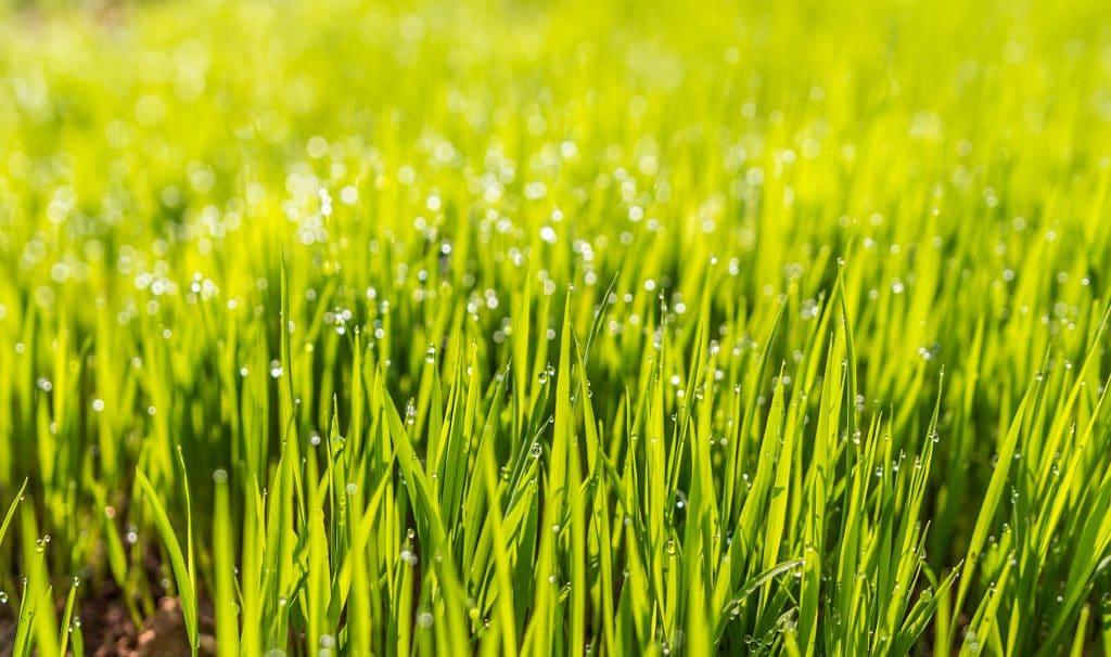 De vijf snelste manieren voor het creëren van een mooie tuin